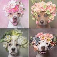 бьюти-образ, beauty-образ, собаки, МАС