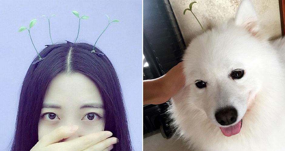 волосы тренды, волосы азиатские, заколки для волос, новые заколки