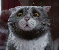 рождественская кампания Sainsbury's видео, видео с котом, котики видео