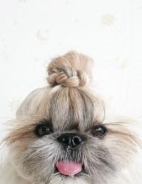 Instagram, собаки Instagram, кошки Instagram, кобаки фото6 кошки фото, стильные животные, милые животные, собаки в венках, кошки в венках
