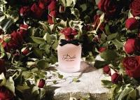 Dolce Rosa Excelsa аромат, Dolce Gabbana новые ароматы 2016, Софи Лорен Dolce Gabbana видео