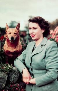 Елизавета II, королева елизавета, королева англии, королева великобритании, корги, дорги, вельш-корги, корги фото, дорги фото