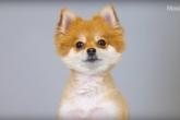 Что-то новенькое: видео про 100 лет собачьей моды сломает твой мимиметр
