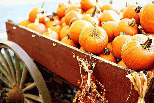 диета,осень-зима 2012,похудение