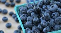 черника,ягоды,маски для лица,домашние рецепты,уход за лицом,лето,сосуды,2014
