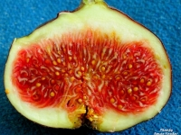 инжир,польза,здоровое питание,осень,зима,иммунитет,жкт,зима