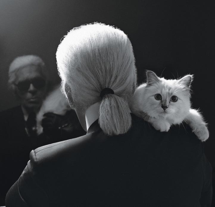 Кошка Карла: любимица Лагерфельда зарабатывает как топ-модель