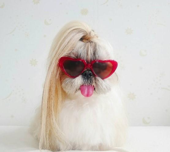 10 стильных собак из Instagram (ФОТО)