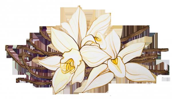 7 ароматов для позитивного настроя