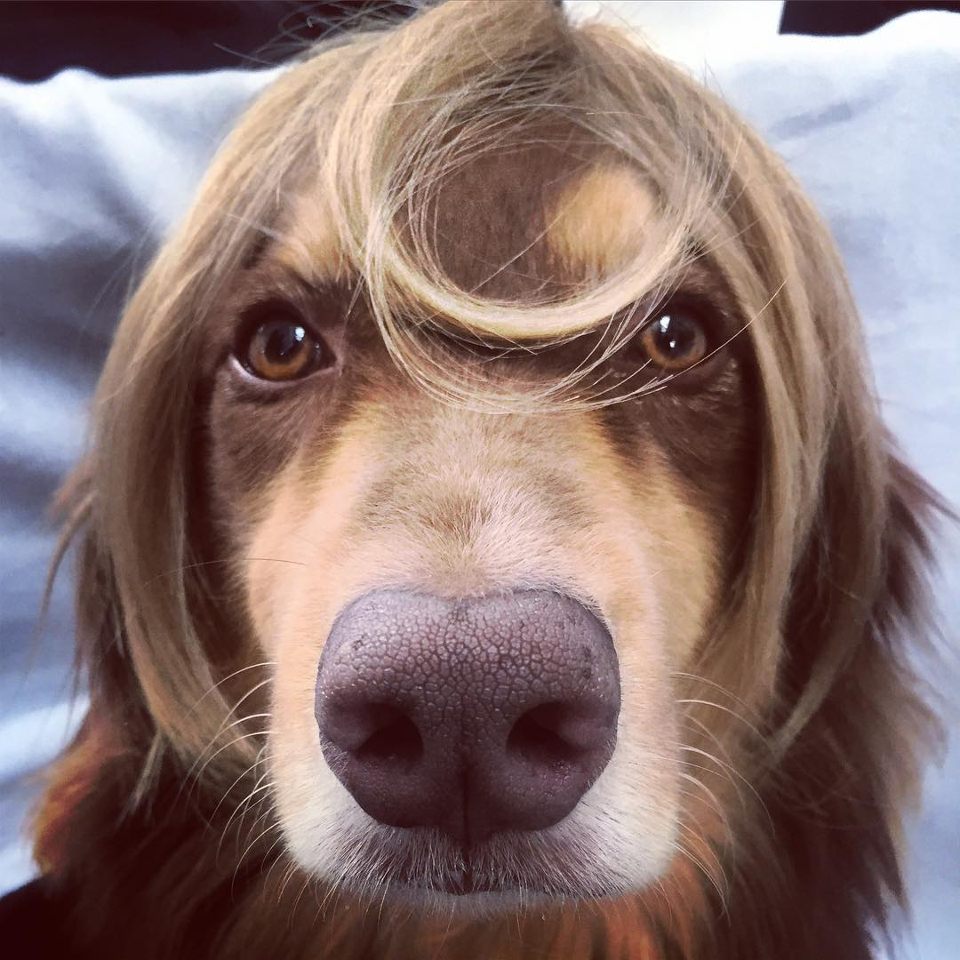 Новая стрижка: Аманда Сейфрид обстригла волосы ради париков