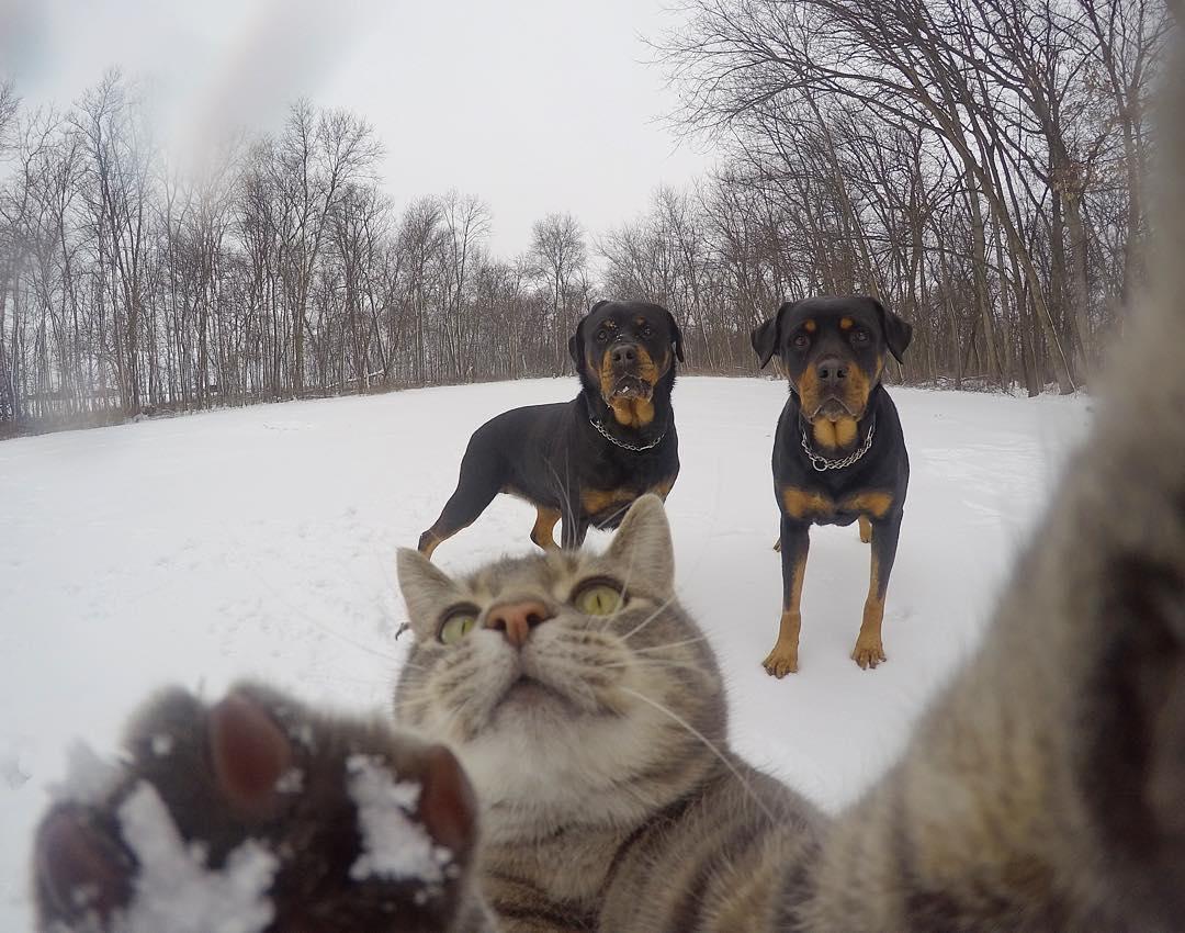 кот делает селфи фото