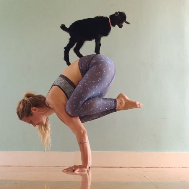 Рога, копыта и йога: шведка практикует йогу с козленком фото