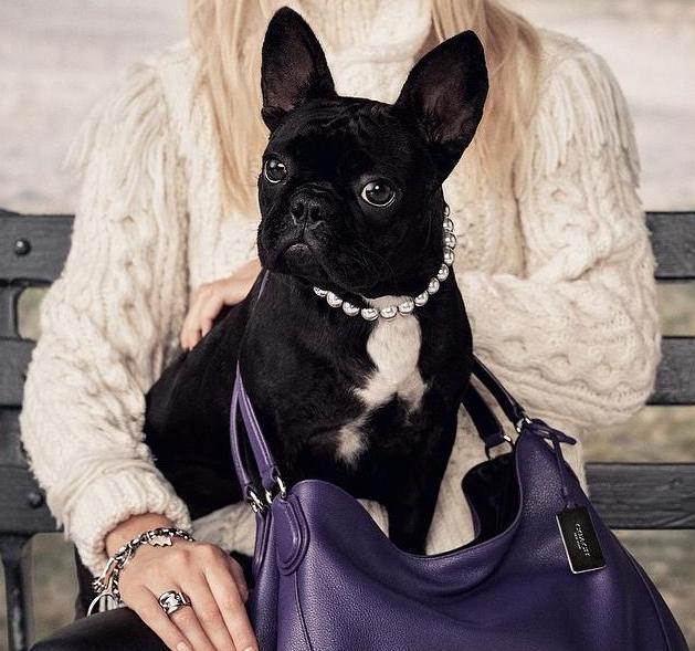 Собака Леди Гаги стала лицом модного бренда