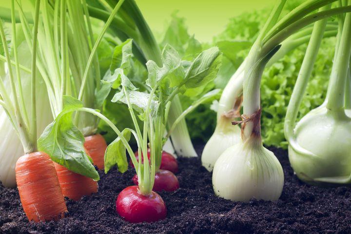 Органическая детокс-диета