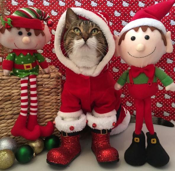 Сеть покорили праздничные коты в новогодних костюмах (ФОТО)