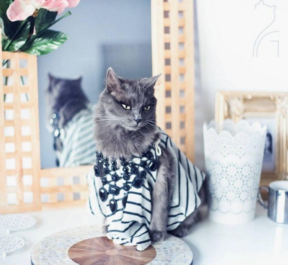 Урчащая модница: эта кошка покажет тебе что значит роскошь и гламур!