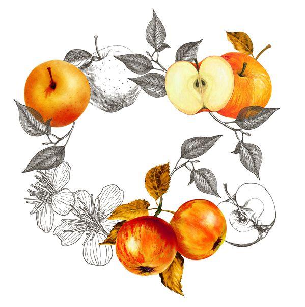 Яблочное наслаждение и пряная ваниль: ароматные новогодние коллекции по уходу за телом от Yves Rocher