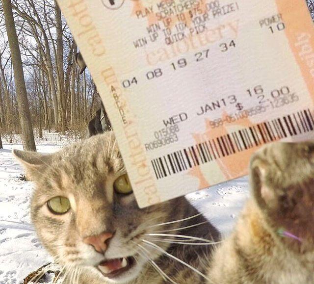 Зуб даем: этот кот делает селфи лучше, чем Ким Кардашьян