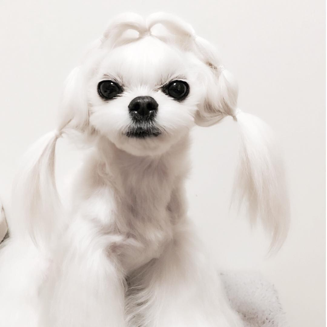 Тот неловкий момент, когда прически маленькой собачки красивее твоих