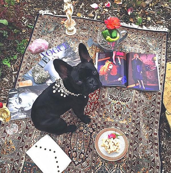 Щенячьи радости: Леди Гага будет создавать одежду для собак