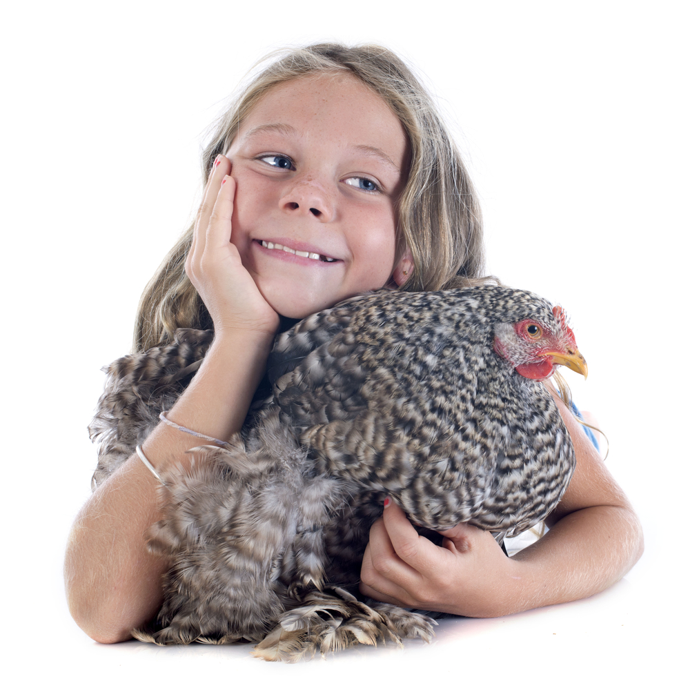 Видео, где маленькая девочка делает макияж курице сразило пользователей Facebook