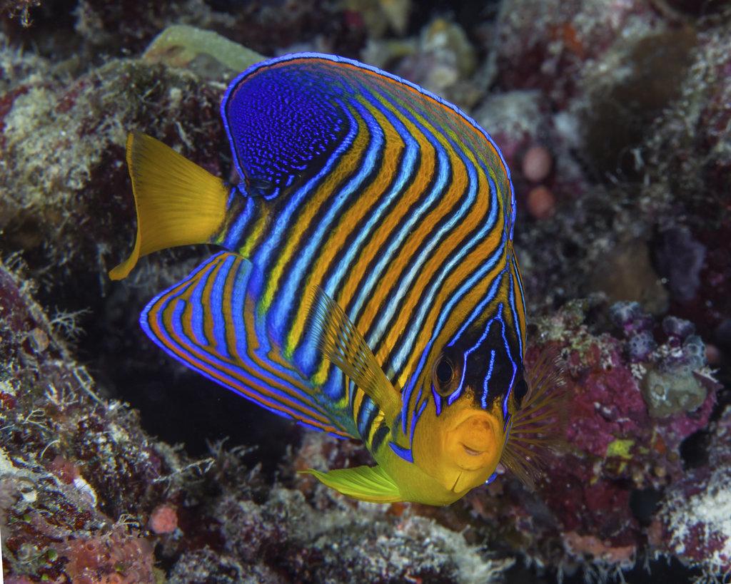 На дне морском: визажист делает нереальный фейс-арт по мотивам тропических рыб