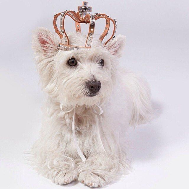 Мохнатые модники: 28 самых стильных животных в Insagram