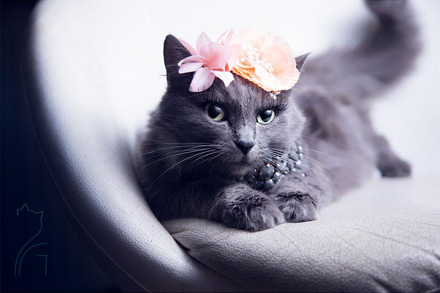 гламурная кошка картинки двинятинцев считается провокационным