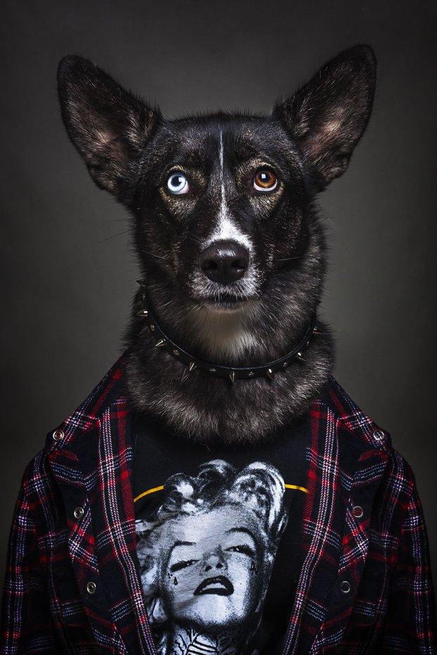 Картинки с животные в одежде