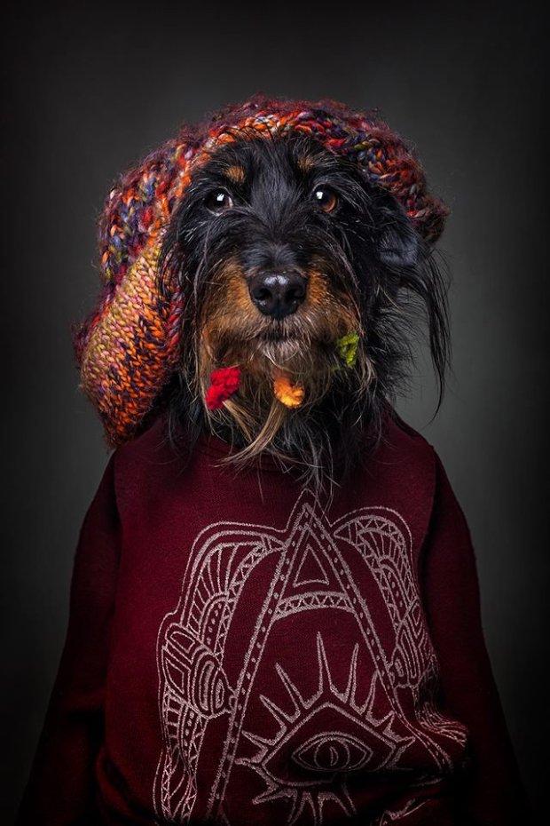 Фотосессия с собаками в человеческой одежде стала хитом сети (ФОТО)