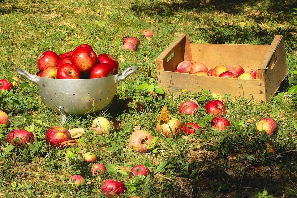 Пять продуктов, которые стоит включить в рацион этой осенью для красивой фигуры
