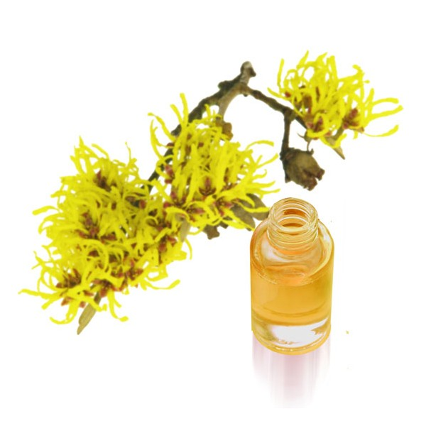 Гамамелис – ценный ингредиент в бьюти-рутине, который был известен женщинам еще в давние времена.