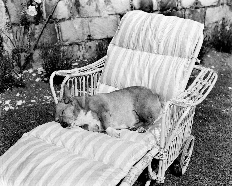 Часть стиля и стиль жизни: фото королевы Елизаветы II с любимыми собаками корги