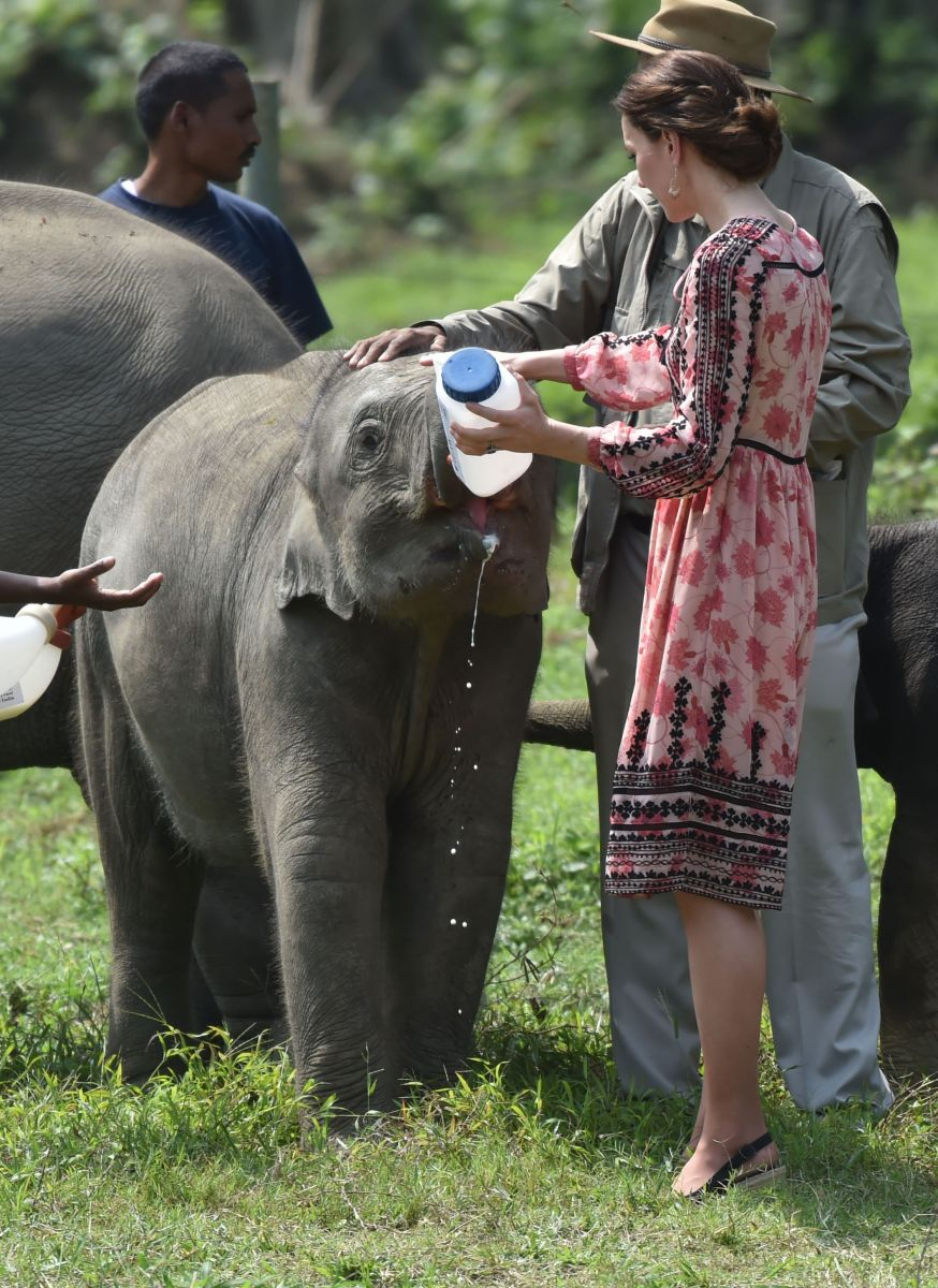 Четвертый день в Индии: Кейт Миддлтон в брюках Zara на сафари и в платье Topshop на кормлении детенышей диких зверей